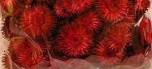 Zobrazit detail - Dekorace květ BODLÁKU  10g