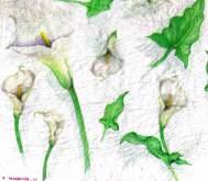 Rýžový papír Kaly 50 x 50 cm Stamperia