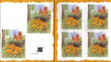 Decor papír - Veverka 17 x 45 cm.