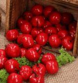 Dekorace umělá Jablíčka červené 2,5cm - 1ks