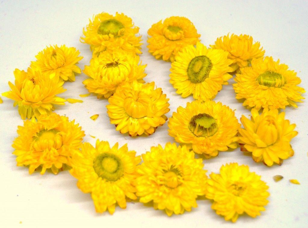 Sušené hlavičky SLAMĚNKY - 15ks - Žluté