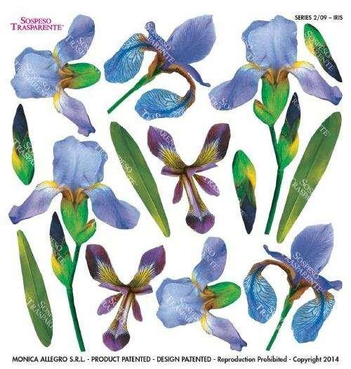 Sospeso fólie Iris