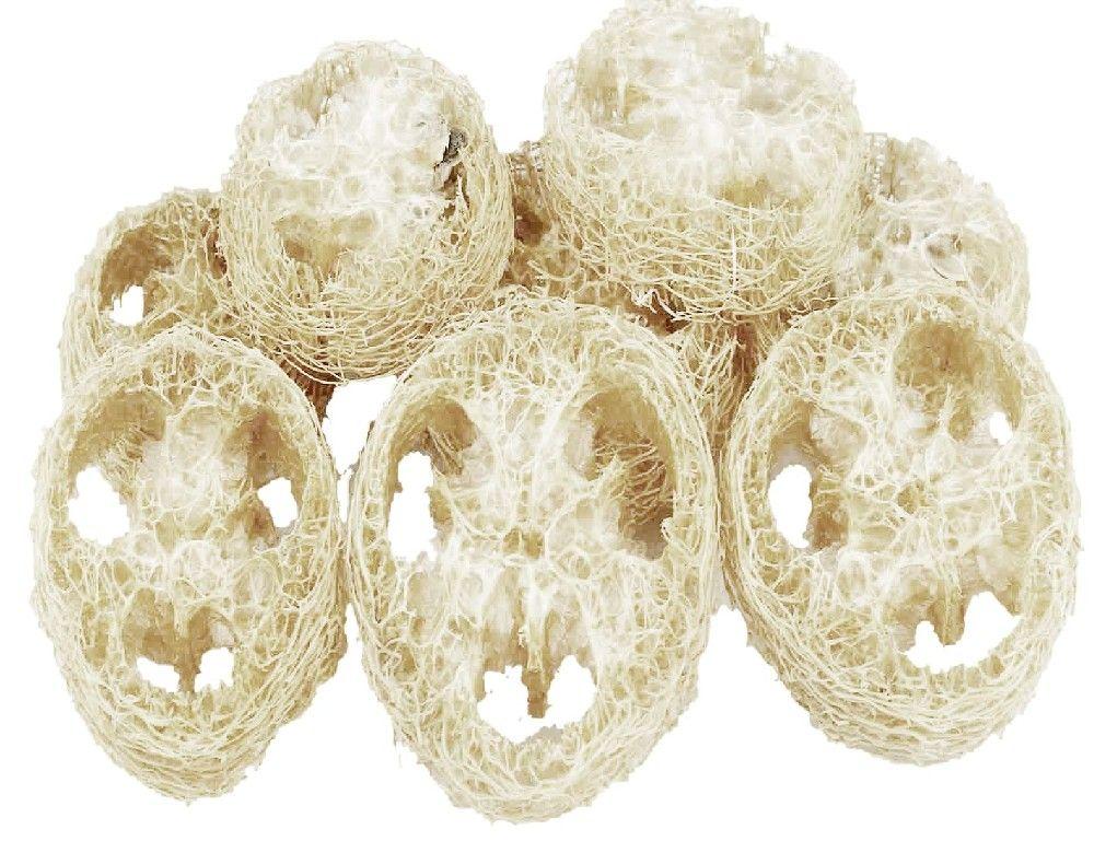 Dekorace přírodní Luffa cca 4-8cm - 2ks
