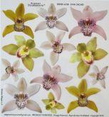 Sospeso termofólie Orchidej 23x23 cm