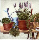 Květiny, rostliny,bylinky