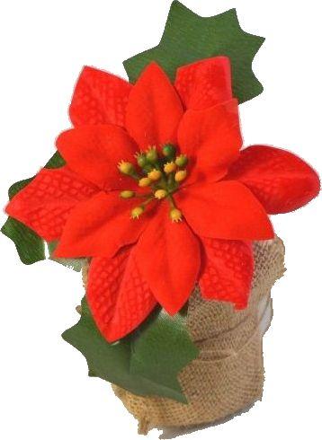 Vánoční hvězda v květníku 12cm