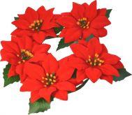 Vánoční hvězdy věneček 20cm/5 květů/