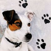 Ubrousek 33x33 cm JACK RUSSELL