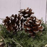 Šiška zasněžená Borovice cca 8cm - 3ks